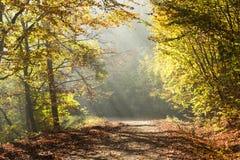 La strada di autunno attraverso la foresta con il sole del lato positivo rays Immagine Stock Libera da Diritti