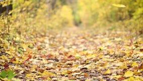 La strada di autunno Le foglie gialle stanno cadendo lentamente dagli alberi archivi video