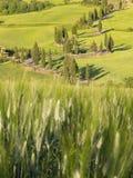 La strada di bobina ha allineato con gli alberi di cipresso in Toscana Fotografie Stock Libere da Diritti