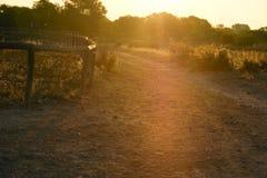 La strada, di mattina luce bagnata del sole Fotografie Stock Libere da Diritti