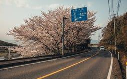La strada di Sakura si illumina, tunnel di sakura nell'isola di shodoshima Fotografia Stock Libera da Diritti
