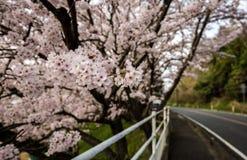 La strada di Sakura si illumina, tunnel di sakura nell'isola di shodoshima Fotografie Stock Libere da Diritti