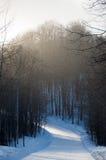 La strada di Snowy ed il terreno boscoso in una neve urlano con le ombre Immagine Stock