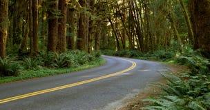 La strada a due corsie taglia da parte a parte la foresta pluviale Fotografie Stock