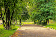 La strada fra gli alberi Fotografie Stock Libere da Diritti