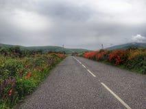 La strada fra i campi con i flouers, penisola delle Dingle, Irlanda Immagini Stock Libere da Diritti