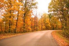 La strada ha allineato con gli alberi di autunno Fotografia Stock Libera da Diritti