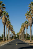 La strada ha allineato nelle palme Fotografia Stock