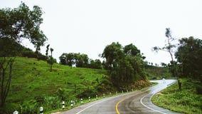 La strada nebbiosa nella foresta, bella immagine del sentiero didattico ha messo il grano Immagini Stock Libere da Diritti