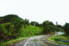 La strada nebbiosa nella foresta, bella immagine del sentiero didattico ha messo il grano Immagine Stock