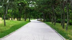 La strada nel parco Immagine Stock Libera da Diritti