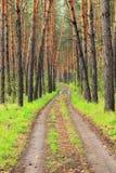La strada nella foresta Immagine Stock