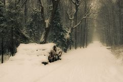La strada nella foresta Fotografie Stock Libere da Diritti