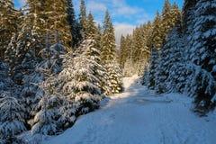 La strada nella foresta dell'inverno allunga nel throug di distanza Immagini Stock