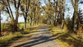 La strada nella foresta gialla di autunno con il vicolo archivi video