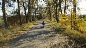 La strada nella foresta gialla di autunno con il vicolo ed il ragazzo guidano su un motorino archivi video