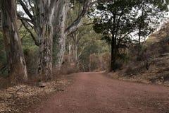 La strada non asfaltata ha allineato con gli alberi con la foglia e la lettiera della corteccia intorno alla base immagine stock