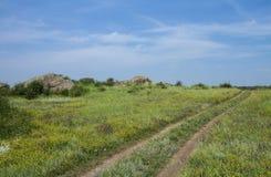 La strada non asfaltata nel campo di fioritura fotografia stock