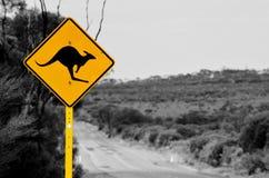 La strada principale del canguro Fotografia Stock Libera da Diritti