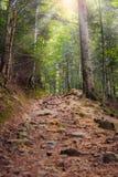 La strada rocciosa su nelle montagne, Carpathians fotografia stock libera da diritti