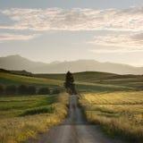 La strada rurale attraversa i campi di colori gialli Immagine Stock Libera da Diritti