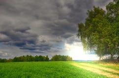 La strada a terra fra un albero di betulla e un'agricoltura sistema Immagini Stock Libere da Diritti