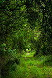 La strada verde Immagini Stock Libere da Diritti