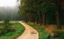 La strada vicino alla foresta Fotografie Stock