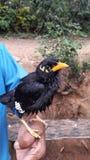 La strategia dell'uccello a disposizione Immagine Stock Libera da Diritti
