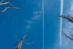 La striscia dagli aerei volanti Rami asciutti di vecchio albero fotografia stock