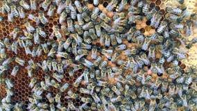 La structure abstraite d'hexagone est nid d'abeilles de la ruche d'abeille remplie du miel d'or banque de vidéos