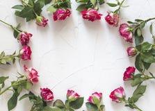 La struttura è fatta di belle rose dei fiori su un fondo bianco Posizione piana, vista superiore, spazio della copia fotografia stock