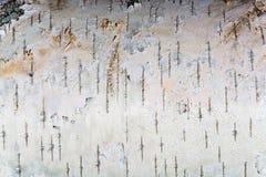 La struttura bianca della corteccia di betulla Immagini Stock Libere da Diritti
