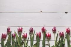 La struttura dai germogli dei tulipani Fotografia Stock Libera da Diritti