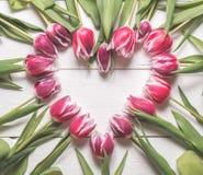 La struttura dai germogli dei tulipani Fotografie Stock Libere da Diritti