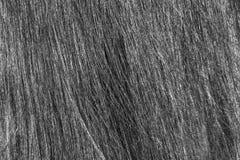 La struttura dei capelli dei women's Fotografie Stock Libere da Diritti