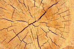 La struttura del cruba di legno della fetta Immagini Stock Libere da Diritti