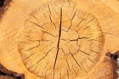 La struttura del cruba di legno della fetta Fotografia Stock Libera da Diritti