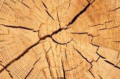La struttura del cruba di legno della fetta Immagine Stock
