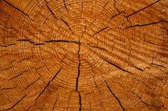 La struttura del cruba di legno della fetta Fotografie Stock