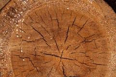 La struttura del cruba di legno della fetta Fotografie Stock Libere da Diritti