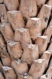 La struttura del fondo della corteccia fotografie stock