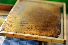 La struttura del fondo ed il modello di una sezione del favo della cera da un alveare hanno riempito di miele dorato in una vista immagine stock