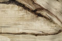 La struttura del legno nel taglio Immagini Stock Libere da Diritti