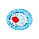 La struttura del nucleo di cellula umana Infographics Illustrazione di vettore su fondo isolato illustrazione vettoriale