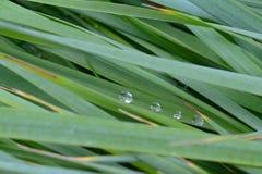 La struttura dell'erba alta bagnata Fotografie Stock