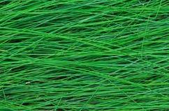 La struttura dell'erba alta bagnata Fotografia Stock