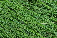 La struttura dell'erba alta bagnata Immagine Stock Libera da Diritti