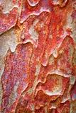 La struttura dell'estratto della corteccia di albero piano ha saturato il fondo luminoso fotografia stock