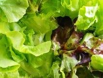 La struttura dell'insalata della lattuga lascia - la vista superiore, fine sull'immagine Fotografie Stock Libere da Diritti